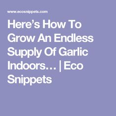 Here's How To Grow An Endless Supply Of Garlic Indoors… | Eco Snippets