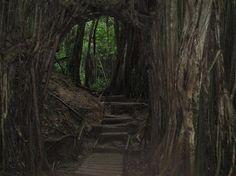 Manoa Falls trail in Honolulu