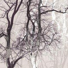 wander wood
