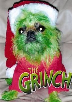 awe! cutest Grinch ever!!!!! http://i391.photobucket.com/albums/oo355/DogtopiaWaco/Grinch.jpg