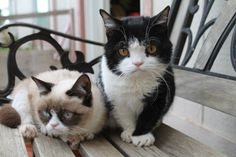 The Daily Grump | December 17, 2012. Grumpy Cat and Pokey. I am overwhelmed by the cute.
