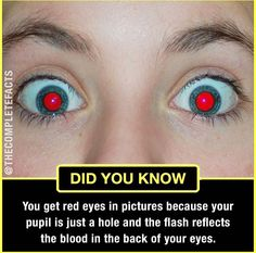 Cameras make eyes red in photos! Wierd Facts, Wow Facts, Intresting Facts, Real Facts, Wtf Fun Facts, True Facts, Funny Facts, Weird, Interesting Science Facts