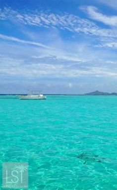 Spot the turtle! Sailing in the Tobago Cays, St Vincent and The Grenadines