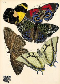 Butterflies, Papillons, E.A. Séguy (1928)