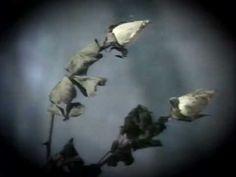 Юрий Шатунов - Белые розы (официальный клип) 1989 - YouTube
