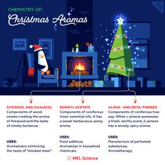 Which aromas remind you of Christmas? Subscriptions For Kids, Chemistry Set, Conifer Trees, Science Facts, Earthy, Essential Oils, Christmas, Xmas, Navidad