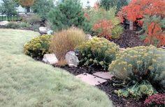 xeriscape plants instead of grass denver - Google Search