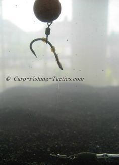 How the pop up swivel hair carp fishing rig looks under water