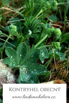 Samos, Korn, Plant Leaves, Herbs, Fitness, Plants, Herb, Flora, Health Fitness