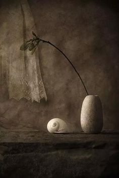 Still Life moonsnail, traitement de Joan Kocak Wabi Sabi, Still Life Photos, Still Life Art, Ikebana, Still Life Photography, Art Photography, Brown Beige, Taupe, Belle Photo