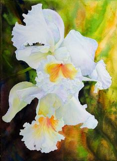 Paintings by Ross Barbera, Watercolor, Acrylic and Digital on Paper Orchids, Watercolor, Digital, Paper, Plants, Paintings, Usa, Pen And Wash, Watercolor Painting
