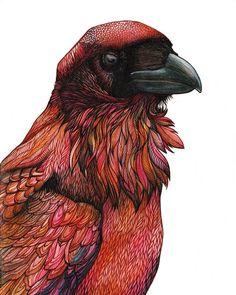 #raven #illustration #birds #animals