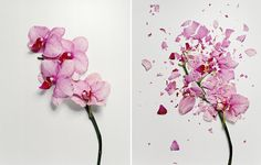 Who thinks to soak fresh flowers in liquid nitrogen for 30 minutes before smashing them into hundreds of little glass-like pieces?! Jon Shireman, that's who. Honestly, cool.