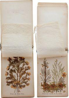 #herbarium