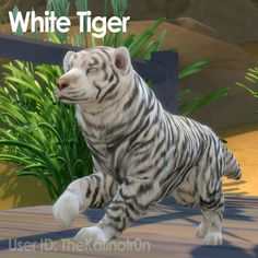 A Lot of Exotic Animals - check all! The Sims, Sims 1, Snow Leopard, Cheetah, Sims Pets, Sims 4 Cc Eyes, Sims 4 Game Mods, Fallow Deer, Sims 4 Mods Clothes