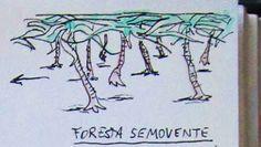 MI LABORATORIO DE IDEAS: evolución vegetal 3