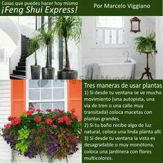 Las plantas y el fengshui