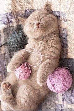 Worn out from playing cute animals sweet cat play pets tired sleeping yarn