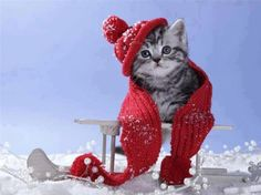 Wish you Happy Winter Christmas Kitten, Christmas Bird, Christmas Animals, Christmas Quotes, Merry Christmas, Cute Kittens, Cats And Kittens, Hello January, Winter Cat