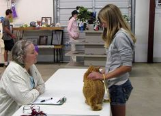 Wisconsin Events: Junior Fair Cat and Kitten Judging County Fairgrounds, Wisconsin, Cats And Kittens, Dodge, Events, Cats