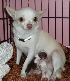 Mama and babes