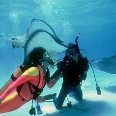 The signature tourism experience of the Cayman Islands is socializing with stingrays at Grand Cayman's Stingray City. Caribbean Vacations, Caribbean Cruise, Dream Vacations, Vacation Spots, Carribean Honeymoon, Grand Cayman Island, Cayman Islands, Places To Travel, Places To Visit