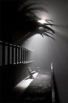 black-white-street Think I was there on that late night; or this picture just gets the emotions of a foggy night. (of course I wasn't there). Gritty and somber stillness.