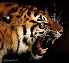 Most Amazing Animals Photos