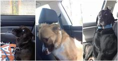 These 16 Adorable Dogs Just Realized That They're Going To The Vet   Diply