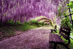 Fuji, the Violet Beauty in Japan / Tokyo Pic
