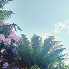 I'm so lucky to live such a blessed life, be surrounded by such beautiful people and to have grown up in such a beautiful Area.  #blessed #blue #pick #Tasmania #tasmanian #hobart #flowes #floral #hippe #pink #summer #summernights #ferns #nature #preech #grateful #nature #naturallyamazing