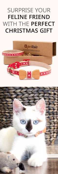 Surprise your kitty with this perfect Christmas gift or your friend. Check this Pettsie cat collar with brecelet