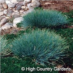 1000 images about low maintenance garden planning on for Low growing ornamental grasses