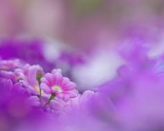 soft purple
