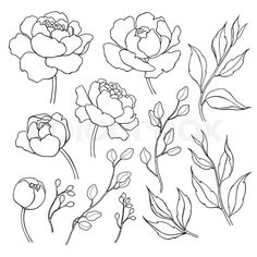 Flower Drawing Peony flower and leaves line drawing. Simple botanical peonies, branch and berry countur. Great for tattoo, invitations, greeting cards, decor Flower Line Drawings, Botanical Line Drawing, Flower Sketches, Outline Drawings, Art Drawings, Tattoo Drawings, Tattoo Sketches, Flower Drawing Tutorials, Sketch Ink