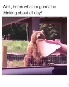 Funny Bears, Cute Bears, Cute Little Animals, Cute Funny Animals, Cute Animal Videos, Funny Animal Pictures, Animal Jokes, Funny Animal Memes, Funny Video Memes