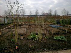 Started with layout of raised vegetable beds at allotment, aanzet van layout verhoogde groentebedden in moestuin