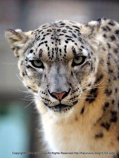 動物中心の写真日記