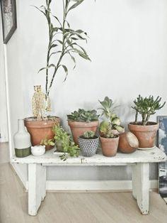 32 besten pflanzen bilder auf pinterest zimmerpflanzen g rtnern und sukkulenten. Black Bedroom Furniture Sets. Home Design Ideas