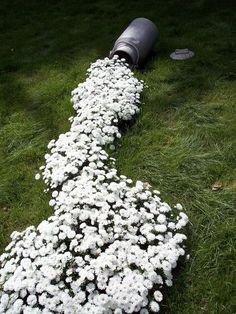 "a flower bed that looks like milk pouring out of old milk can!  I have the milk can already.  Wonder where I could put this in my ""no-yard"" yard?"