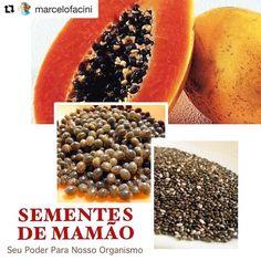 """- MARCELO FACINI🌱🍞 (@marcelofacini) no Instagram: """"Pimenta de sementes de mamão? Vermífico? Antiparasitas? Detox?  Sim, tudo isto e muito mais. As…"""""""