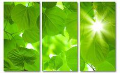 Groen Foto Schilderij Bladerdak (drieluik canvas bladeren)
