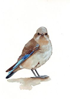 Wren Painting Bird Art print of watercolor by Splodgepodge on Etsy
