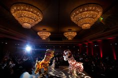 Dragon Dancers at Wedding by Brandon Wong Photography