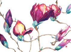 Magnolia buds by Sara Steele