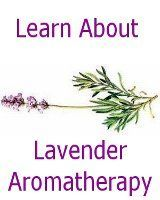 Everything lavender. Growing, recipes, uses, oils, etc.
