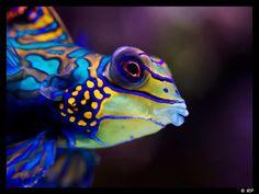salt water fish - Bing Images