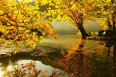 Autumn Yellow Dream Leaf Lakes Red Trees Dreamy Leaves Reflections Water Reflected Heaven Rivers Lake Tahoe Screen Wallpaper