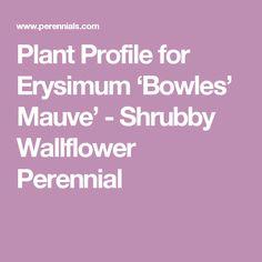 Plant Profile for Erysimum 'Bowles' Mauve' - Shrubby Wallflower Perennial