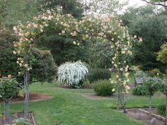 Autumn Sunset arch at McKinley Rose Garden in Sacramento, April 12, 2001 Such a beautiful place. Volunteers needed: http://friendsofeastsacramento.org/?page_id=27
